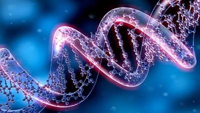 ДНК рейки